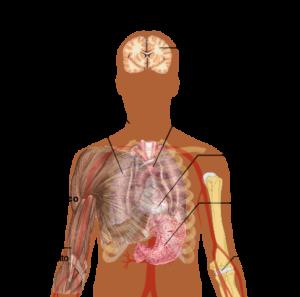 virus Ebola sintomi