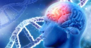 Brain Complex MaxMedix: Integratore Nootropico