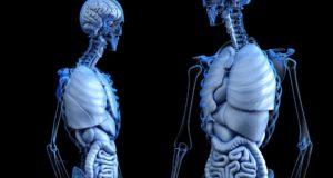 Disintossicare l'Intestino